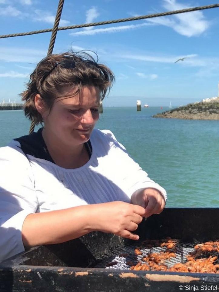 Diana pult Krabben